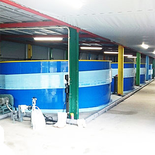 冷温水循環式・閉鎖型陸上養殖システム